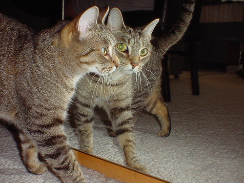 cat-and-mirror.jpg