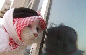 kucing-comel.jpg