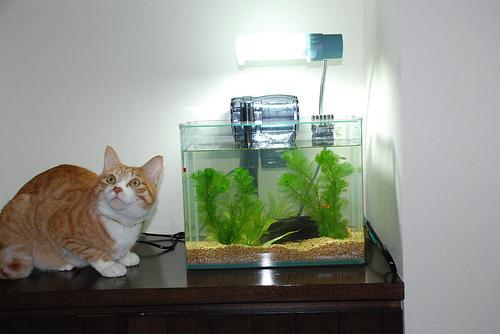 kucing-dan-ikan.jpg