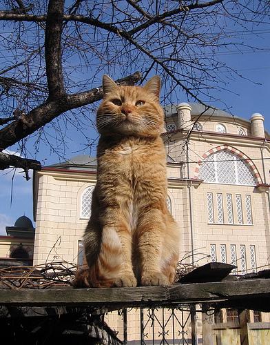 kucing 1